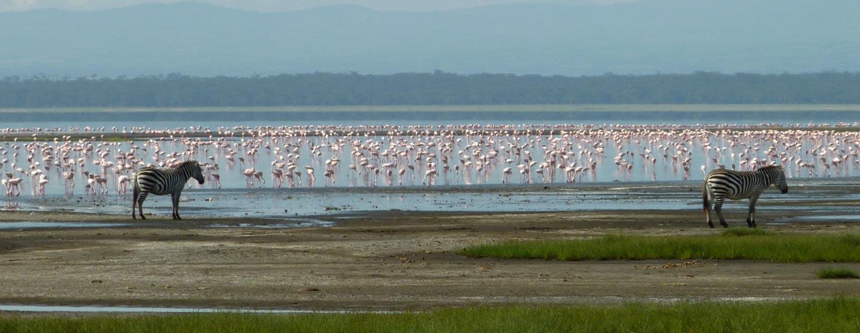 אגם ברינגו / קניה - פלמינגו באגם