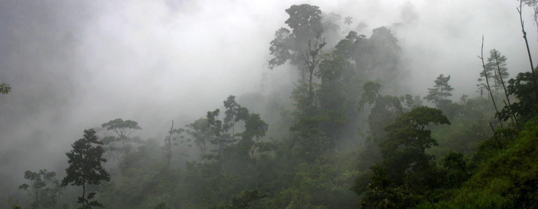 פנמה - יער עננים אפוף בערפל