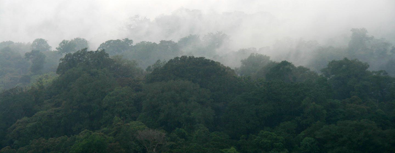 ג'ונגל במרומי ההרים באי באלי - אינדונזיה