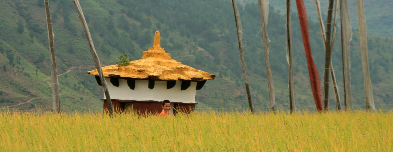 עמק פונאקה / בוטאן - שדות אורז בהבשלה