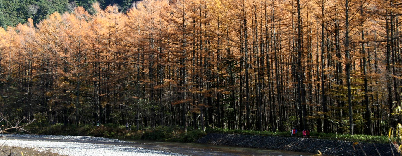 סתו ביפן - יער בשלכת באלפים היפניים