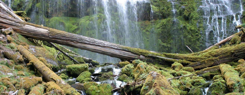 אורגון / ארצות הברית - נביעות ביער וילאמט