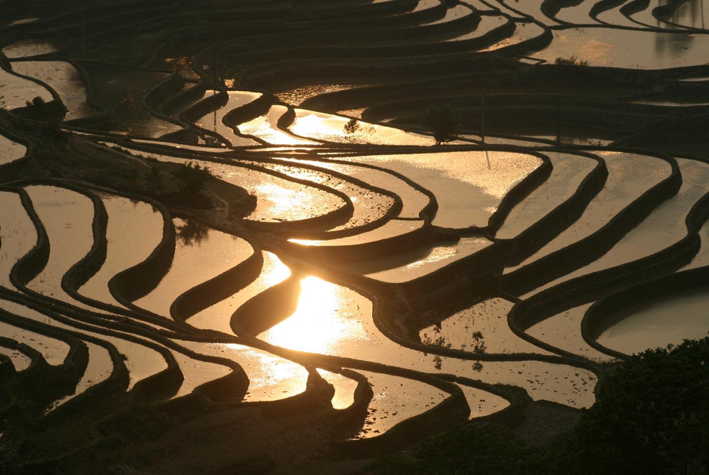 טרסות בהצפה במחוז יונאן, דרום מערב סין