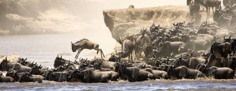 הנדידה הגדולה, טנזניה