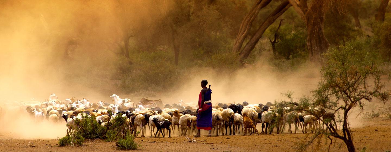 טיול לטנזניה