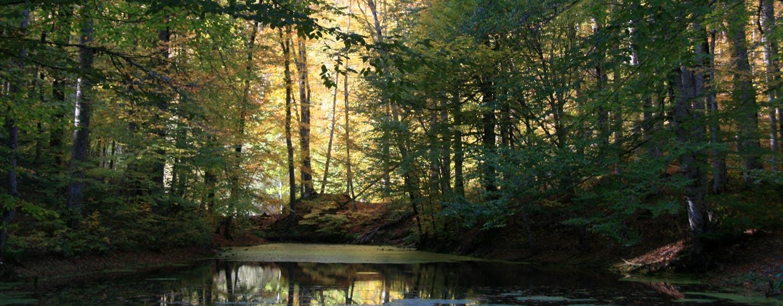 טורקיה - יער בשלכת בשמורה ליד הים השחור