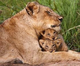 9 ימים אל שמורות הטבע במזרח אפריקה