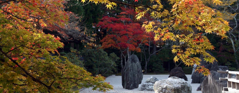יפן - שלכת בגן יפני בהר קויה