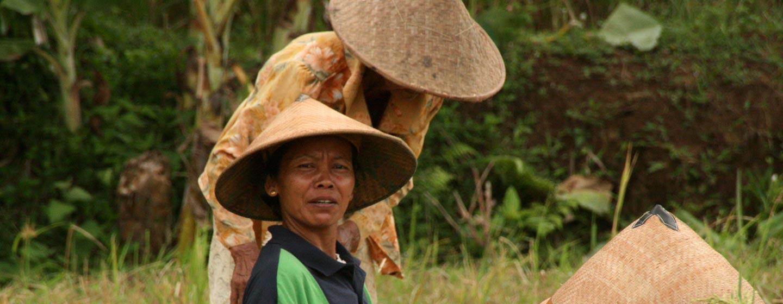 נשים בשדה אורז, האי ג'אווה, אינדונזיה