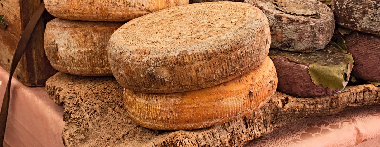 גבינות איטלקיות