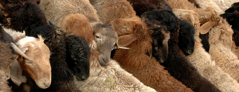 שוק בעלי חיים במערב סין