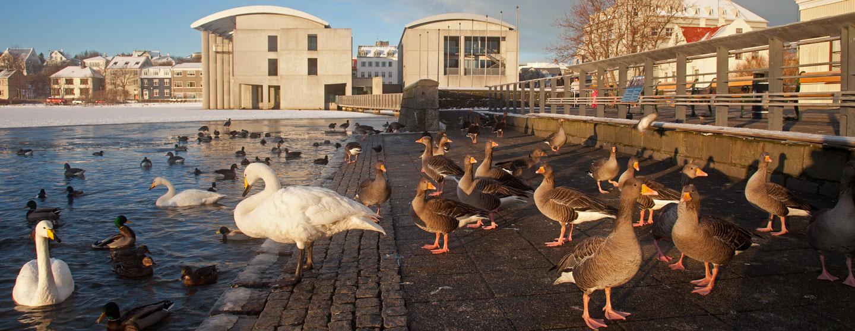 רייקיאוויק, בירת איסלנד