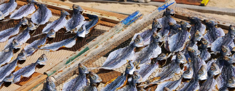 דגים מיובשים בנזארה, פורטוגל