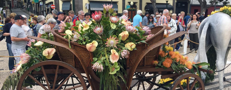 פסטיבל הפרחים באי מדירה
