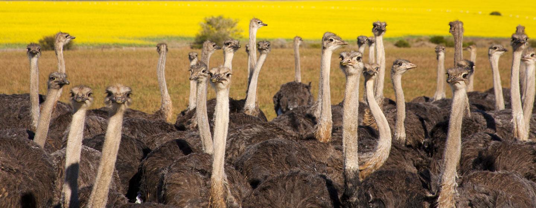 טיול לדרום אפריקה