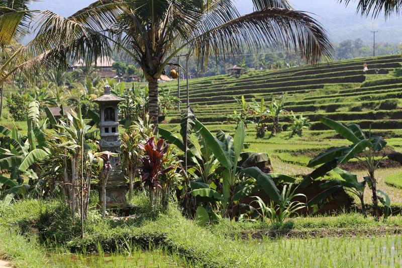 מקדש לאלת האורז, דווי שרי, באי באלי שבאינדונזיה | צילום: ניסו קדם