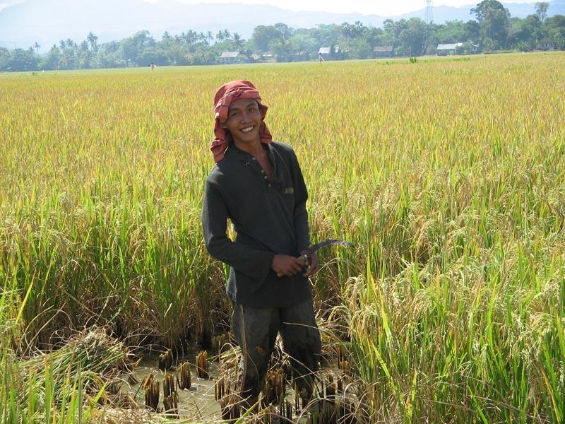 נער בשדה אורז, ג'אווה, אינדונזיה. צילום: ירדנה זיגמן-איגרא