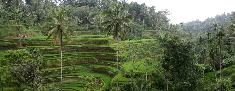 טרסות אורז בבאלי, אינדונזיה