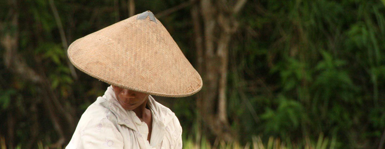 אשה בשדה, ג'אווה, אינדונזיה. צילום: ניסו קדם