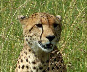 9 ימי טיול אל שמורות הפרא במזרח אפריקה
